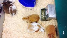 first rabbit sale